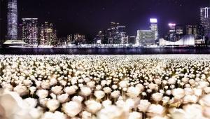 【感動】まるで魔法のようにバラが輝く「ライトローズガーデン」がファンタジー / 香港島で期間限定開催