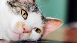 【感涙】猫が死ぬ直前に心を許した人にだけ見せる行動が衝撃 / 猫「サヨナラいままでありがとうね」