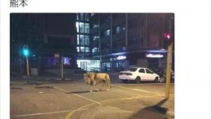 【熊本地震】悪質な人物が「地震で動物園からライオンが放たれた」とデマを拡散させて大混乱! 熊本県警察「デマと判明した」