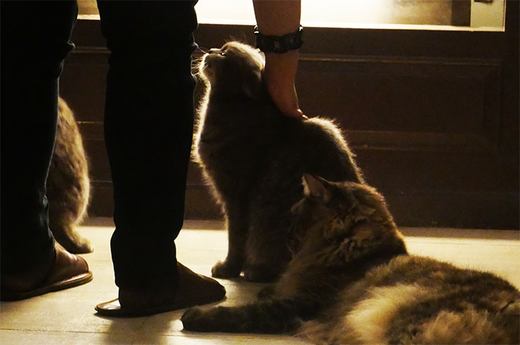 purr-cat-cafe-club7