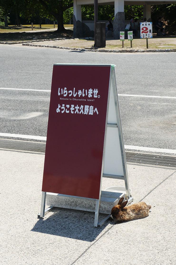 usagi-no-shima20
