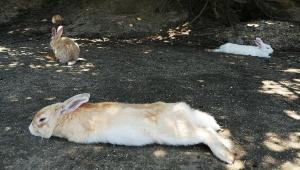 【衝撃】伝説のウサギ島・大久野島に行ってみた / 野生のうさぎが船をお出迎え! 癒やしと兎の聖地