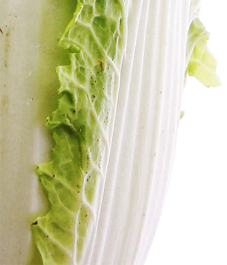 白菜 黒い点々