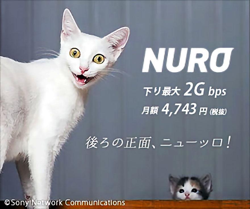 nuro-neko