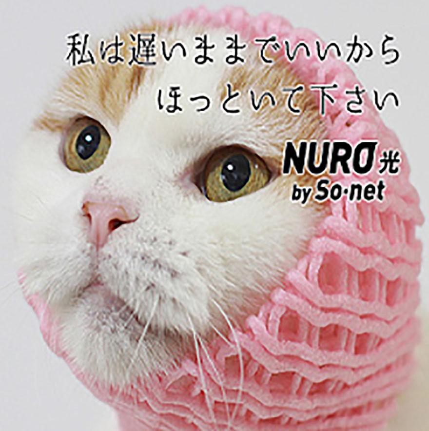 nuro-neko2