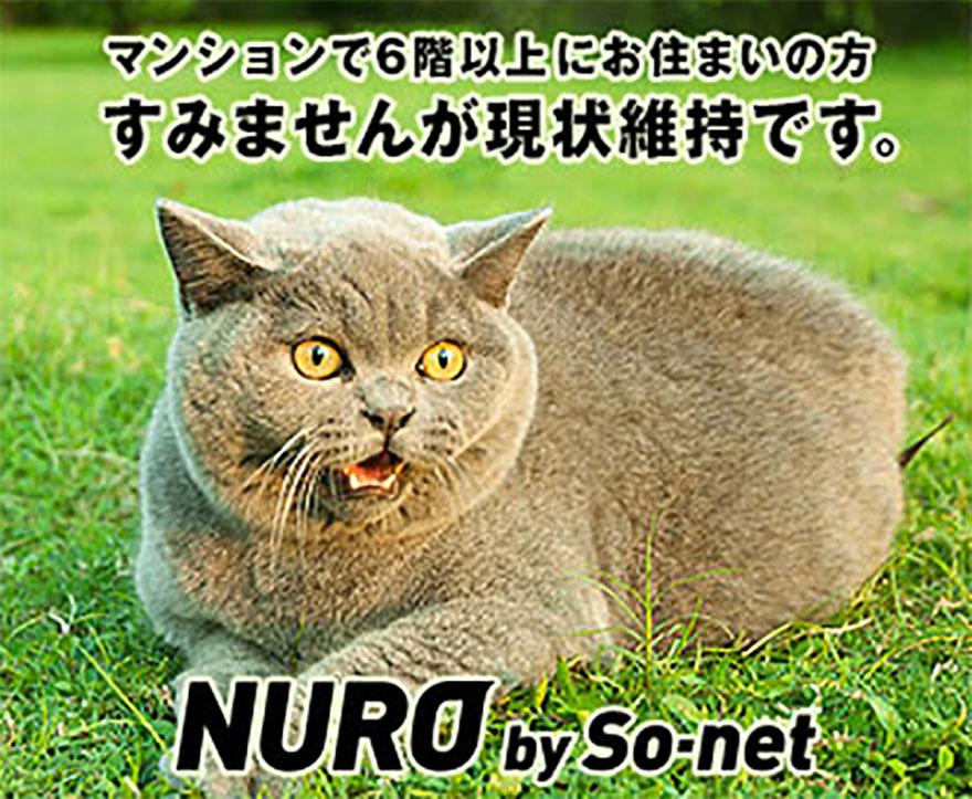nuro-neko4
