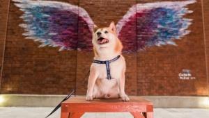 【朗報】本気でMARINE&WALK YOKOHAMAがフォトジェニック! 天使みたいなペットを本当の意味で天使にできるスポット