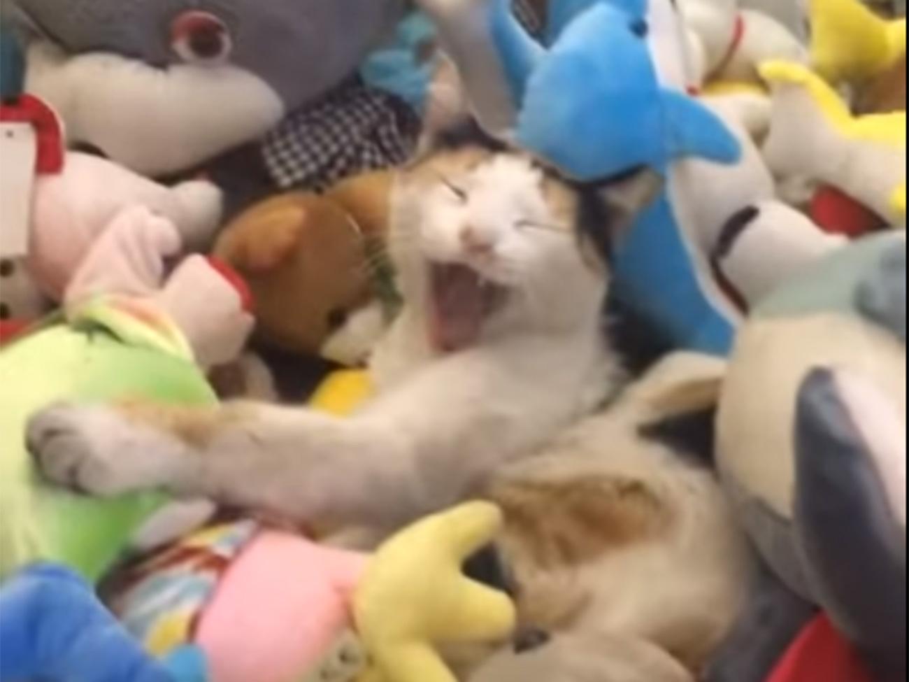 cat-ufo_04