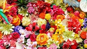 【職業コラム】花屋に憧れる女子は多いけどそんなに甘くないしむしろチョー厳しすぎるよ / 生花店