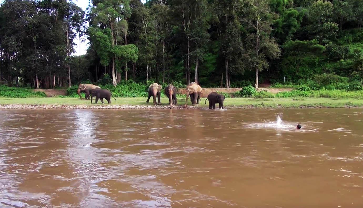 elephant-river-rescue