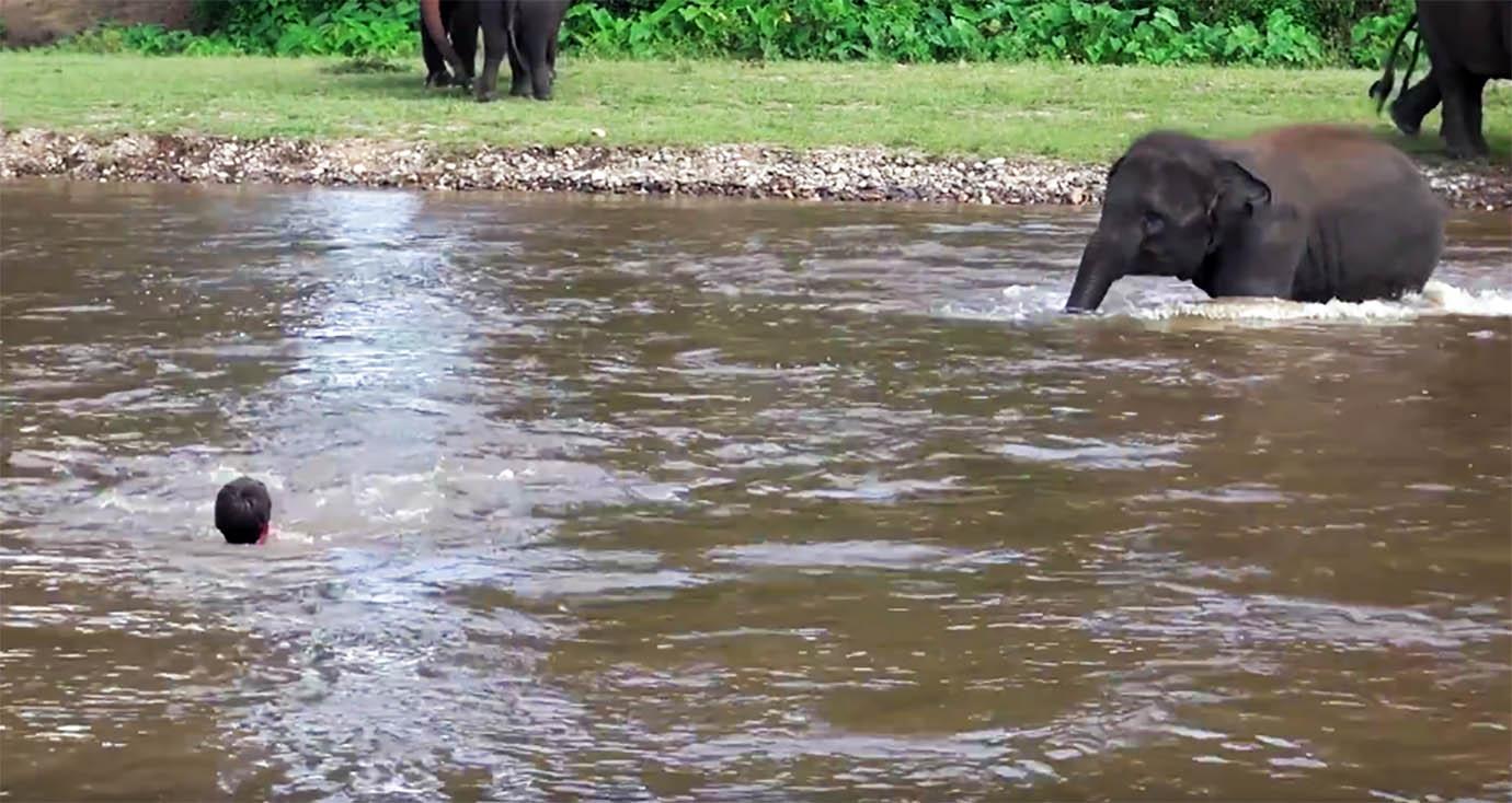 elephant-river-rescue1
