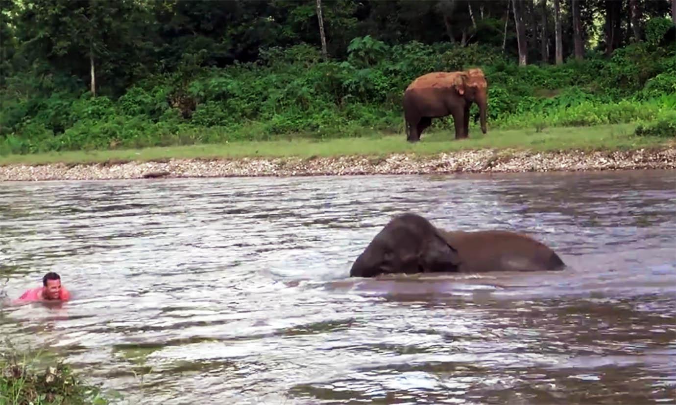 elephant-river-rescue2