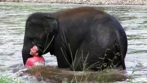 【感動】人間が川で溺れてると勘違いした小象が救助に向かう動画 / 世界中の人々から感動の声