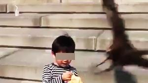 【衝撃】鳥にパンを奪われた子どもの動画が爆発的な大人気 / 動画公開で国民的ちびっ子へ(笑)