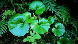 【伝説の島】東京都の秘島・青ヶ島の植物たち / 神々に守られし二重火山の島