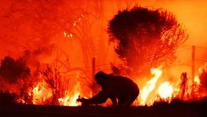 【感動動画】キケンな山火事から野ウサギを救った男 / 迫りくる地獄の業火に飛び込む姿に世界中が感動
