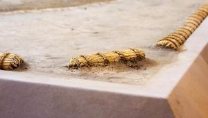 【大炎上】大相撲女人禁制事件で新事実判明 / 女性を土俵からおろしたあと大量の塩をまいて清めていたことが判明 → 炎上