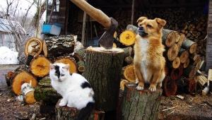 【現地取材】チェルノブイリ立入禁止区域で勝手に暮らすおじいさん / 動物に囲まれてのどかに暮らす「かわいそうだから飼った」