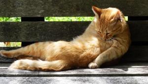 【緊急事態発生】大阪地震の影響で窓に挟まる猫が多数出現 / 身動きできずフリーズ状態に