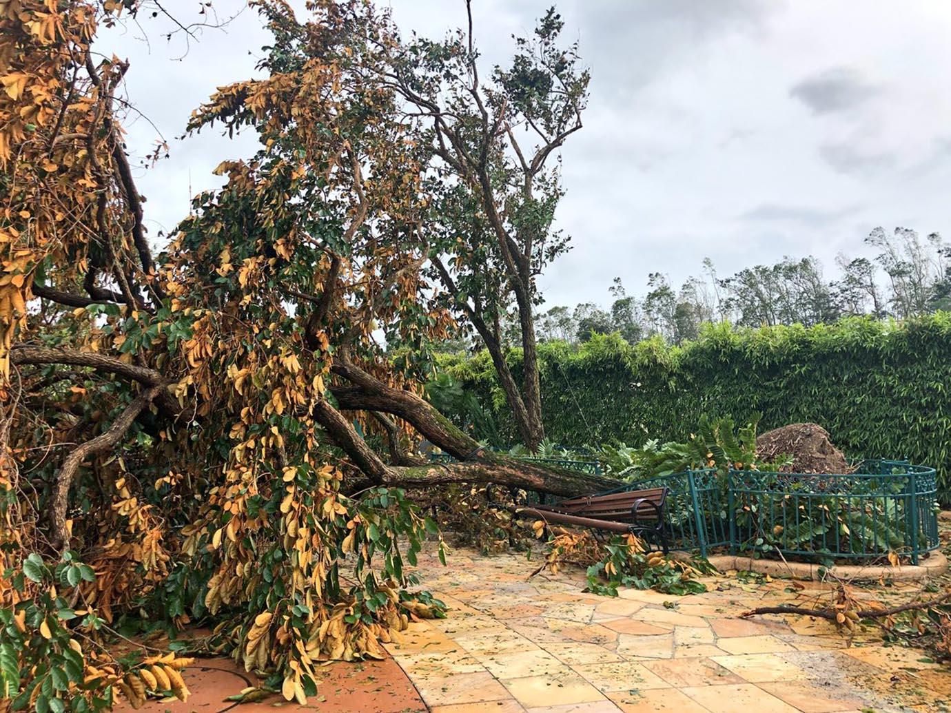 hong-kong-disneyland-damage