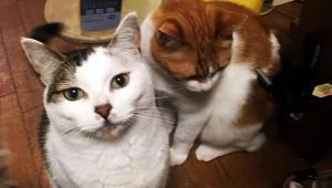 【緊急事態】北海道地震で多数の猫が行方不明 / 地震でいなくなった猫リスト一覧公開「見つけたら連絡を!」