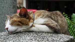 【話題】猫の寿命は約15歳 / 猫が命を落とす死因1位が判明「気をつければもっと長寿に」