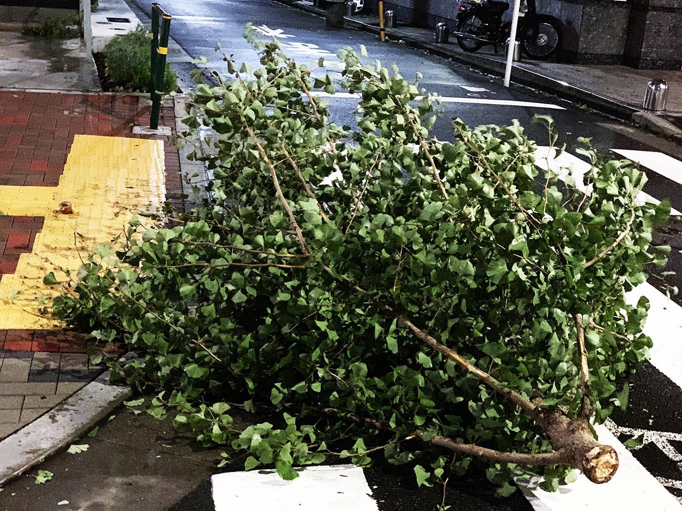 tokyo-taifu