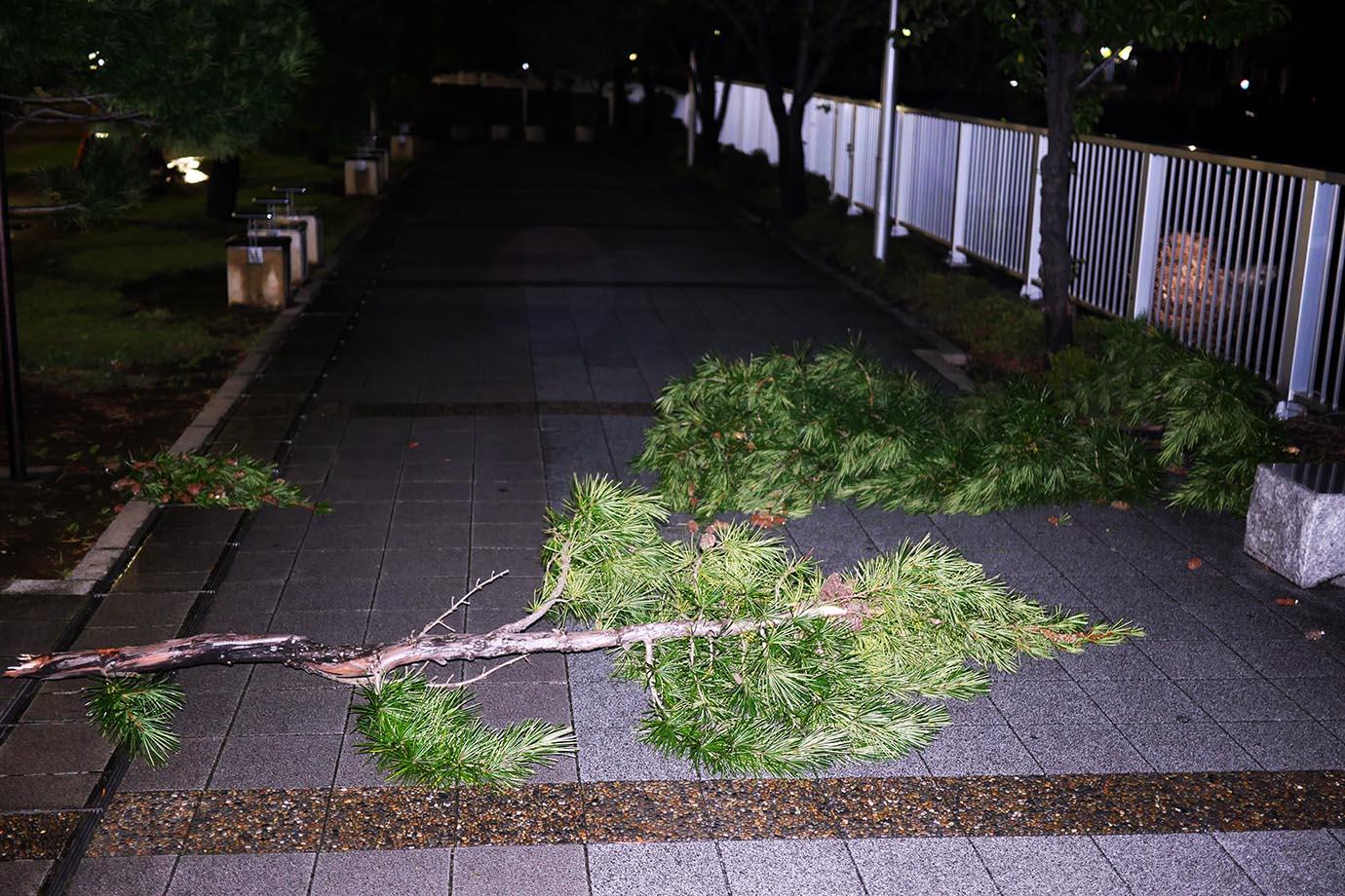 tokyo-taifu6