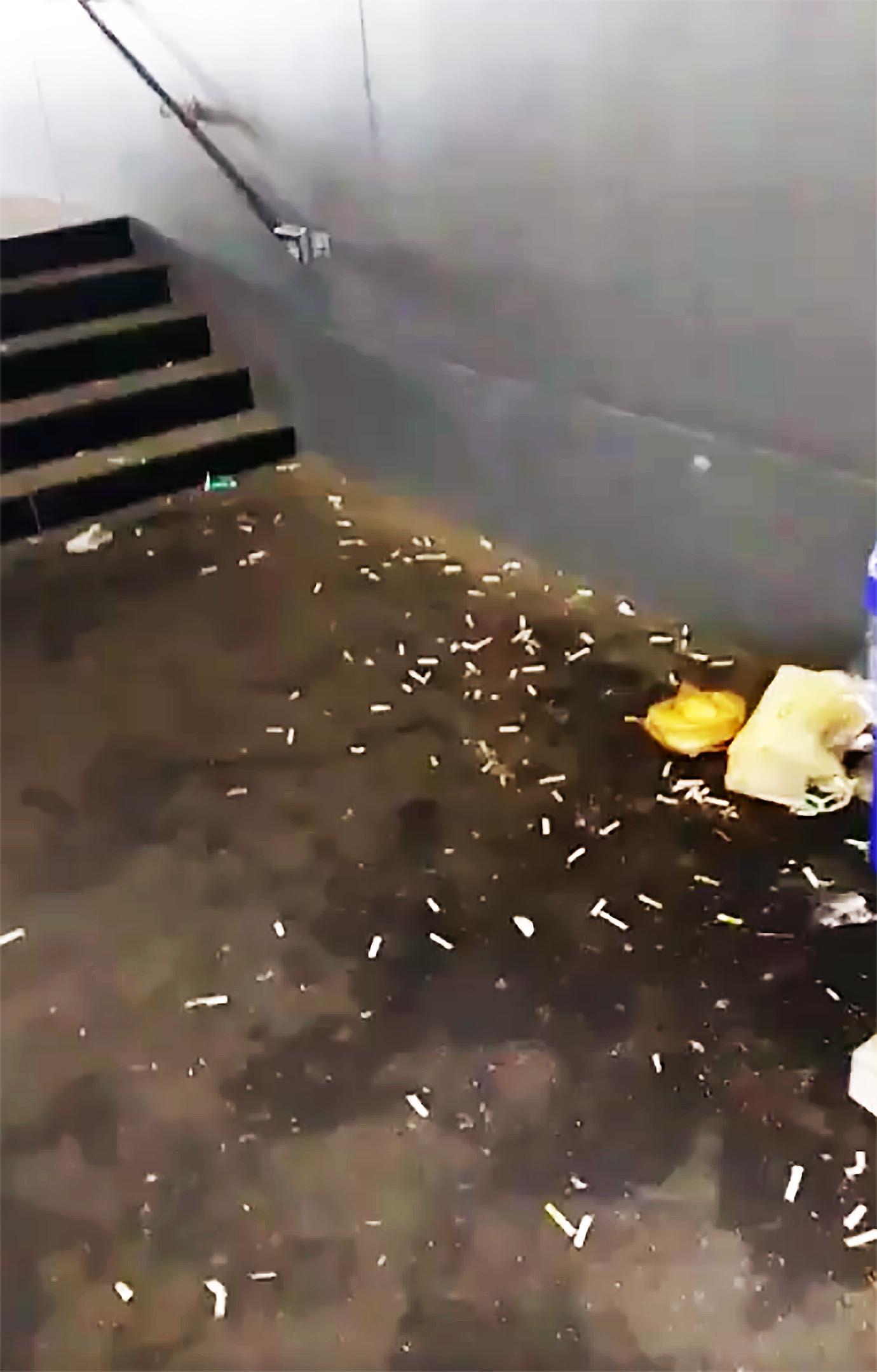 tsukiji-toyosu