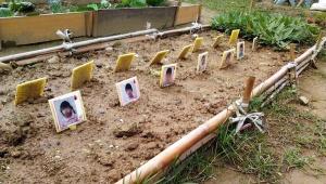 【話題】幼稚園児の畑に「顔写真」を添えて大炎上 / 家族「墓場みたいな気分になった」