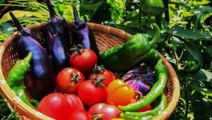 【大絶賛】ダウンタウン松本人志が「果物と野菜の違い」を断言して絶賛 / 松ちゃん「マヨネーズかけて食えるのが野菜だ!」