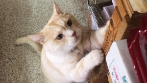 【救助要請】阿佐ヶ谷で行方不明の猫を公開大捜索 / ギター背負う女が連れ去りか「黒い首輪のゴンちゃん」