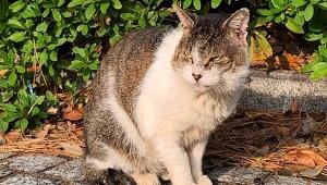 【猫特集】キミは東大生に愛される「駒場ネコ」を知っているか! 東大敷地内で飼われている地域ネコ