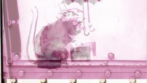 【話題】東京都のバンクシーのネズミ絵が「ほぼ本物」と確定 / バンクシー公式サイトにも同様の絵が掲載