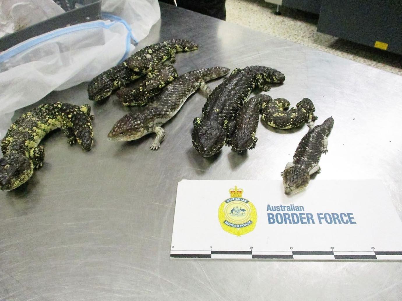 japanese-women-arrested-smuggling3