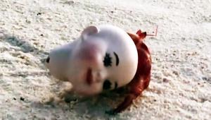 【話題】貝がないので人形の頭を家にしたヤドカリ / 進化する生態