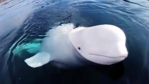 【衝撃の感動動画】海底に落としたカメラを拾ってきてくれたイルカ / 野生なのに優しくて親切