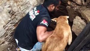 【救出動画】倒壊した家の下敷きになった子犬 / 母犬が懸命にヘルプを求めて救出