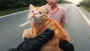 【救出動画】道路でうずくまる子猫がライダーに救出される / その場にいたおじさんが引き取る