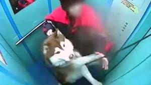 【犬ニュース】犬を飼ってる人に注意喚起! エレベーターに乗るとき気を付けたくなる動画