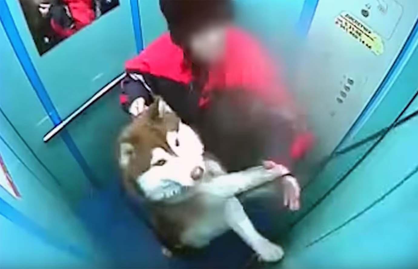 dog-and-elevator