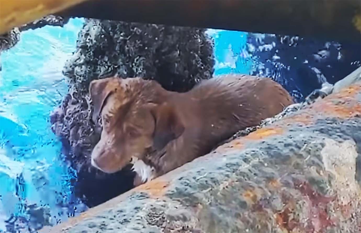 dogs-sea