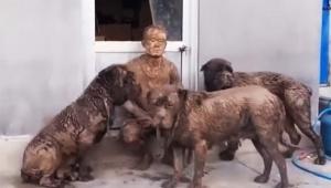 【犬ニュース】犬3匹を散歩に連れて行った結果 / 大変な状態になり帰宅「どうしてこうなった(笑)」