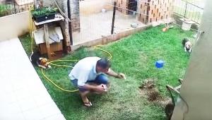【動画ニュース】アリの巣にガソリンを流し込んで点火した結果