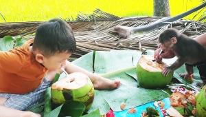 【話題】人間と家族として暮らす子猿が可愛すぎる動画 / ストローでチューチュー吸ってジュース飲む
