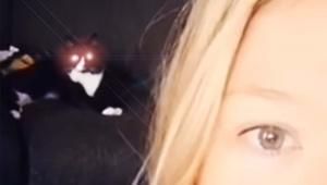 【猫ニュース】ご主人様が歌うのを絶対に阻止したい猫の動画が凄すぎる件
