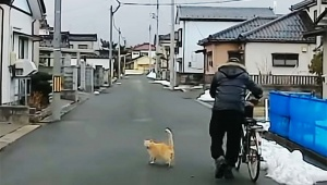 【猫ニュース】猫が「うしろからクルマが来てるよ!」と教えてる動画 / しかしおじちゃん気が付かない