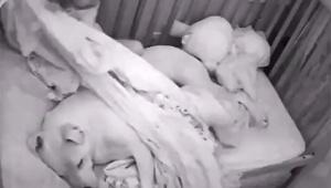 【動画ニュース】犬に布団をかけてあげる赤ちゃんの動画 / あまりにも可愛すぎて話題に
