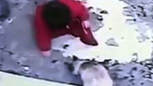 【感動動画】人間の赤ちゃんを救ったシャム猫 / 乳児が階段から落ちるのを防ぐ