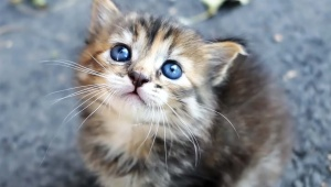 【衝撃動画】シャーッ! ブチギレ激怒してる猫に激ウマ飯を与えた結果 → ゴロニャ~ン♪